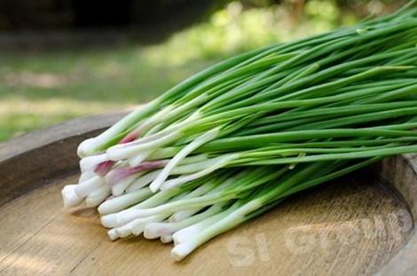Một doanh nghiệp Hàn Quốc cần nhập khẩu hành hoa (welsh onion)
