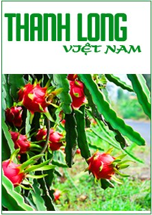 Tìm đường cho thanh long Việt Nam vào thị trường Úc