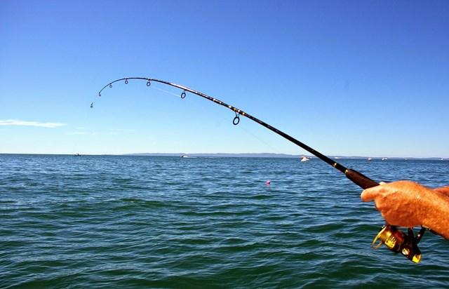 Doanh nghiệp Úc tìm doanh nghiệp Việt Nam cung cấp đồ câu cá