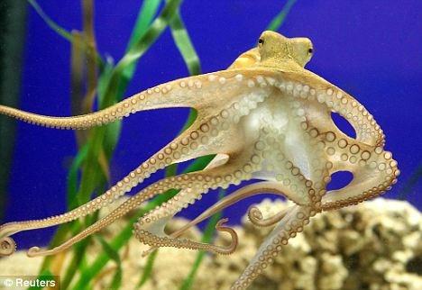 Xuất khẩu mực, bạch tuộc tăng 55%
