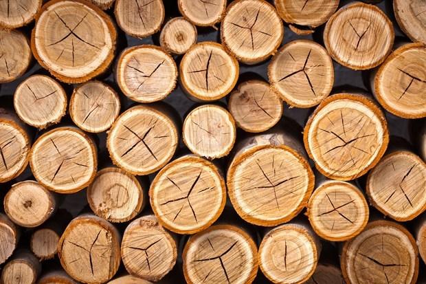 Giá gỗ nhập khẩu tuần 6-13/10/2017