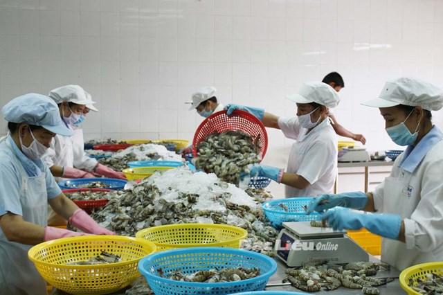 Xuất khẩu cá tra sang Tây Ban Nha giảm hơn 70%