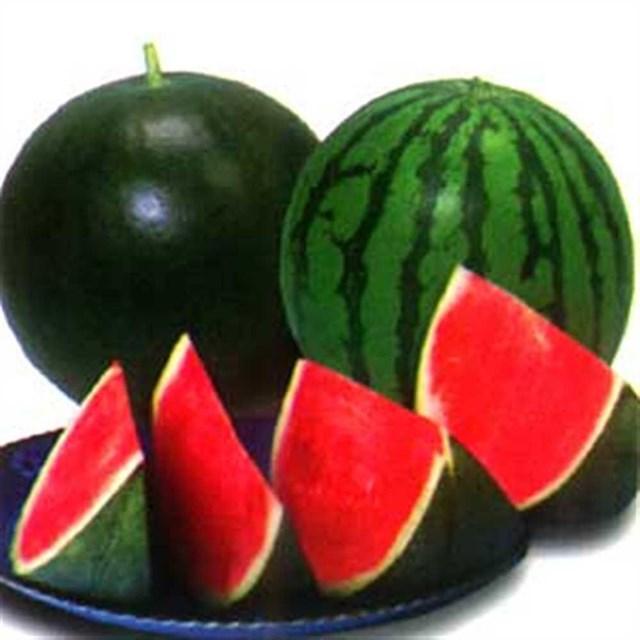 Phổ biến quy định của đối với sản phẩm dưa hấu xuất khẩu