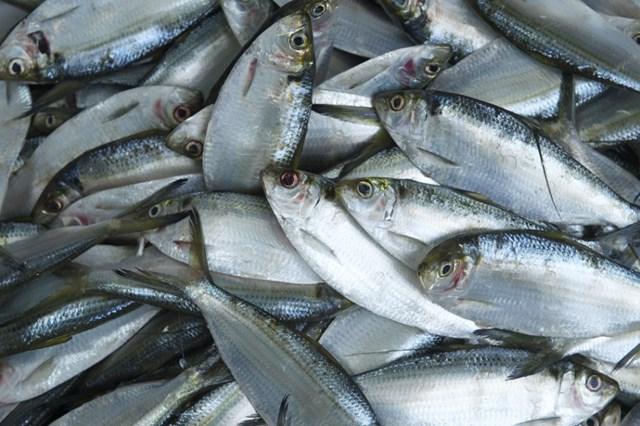 Năm 2017 nhập khẩu thủy sản từ tất cả các thị trường chủ chốt đều tăng kim ngạch