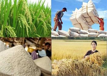Xuất khẩu lúa gạo và thủy sản vùng đồng bằng sông Cửu Long tăng mạnh