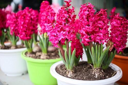 Người Việt bỏ 18 triệu USD nhập hoa, cây cảnh trước Tết Nguyên đán