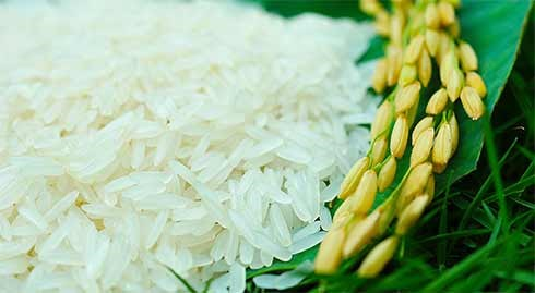 Giá gạo xuất khẩu tuần 30/3/2018 – 5/4/2018