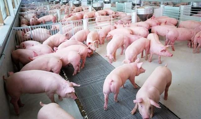 Giá lợn hơi ngày 3/5/2018 đứng ở mức cao