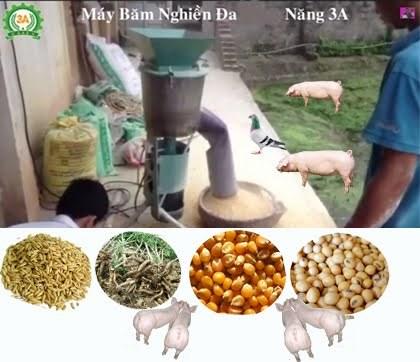 Giá nguyên liệu sản xuất thức ăn chăn nuôi nhập khẩu tuần 20 -26/7/2018