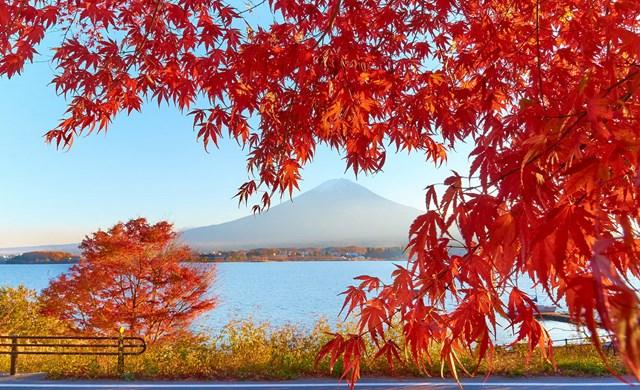Xuất khẩu sang Nhật: Hàng dệt may đứng đầu về kim ngạch