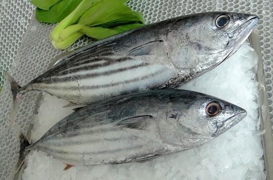 Cá ngừ xuất khẩu có sự dịch chuyển thị trường