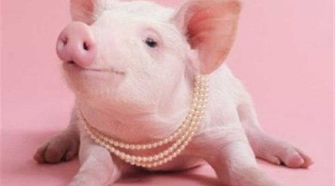 Giá lợn hơi ngày 6/10/2018 ổn định trên thị trường cả nước