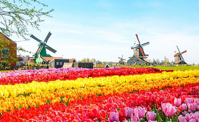 8 tháng đầu năm Việt Nam xuất siêu sang Hà Lan 4,31 tỷ USD