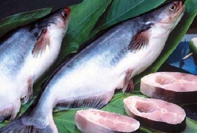Kiểm soát cá tra xuất khẩu sang Trung Quốc