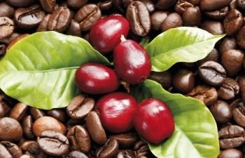 Giá cà phê xuất khẩu 11 tháng đầu năm giảm trên 17%
