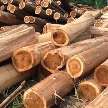 Tin đáng chú ý 18/3/2019: Giá thép, gỗ keo tăng mạnh