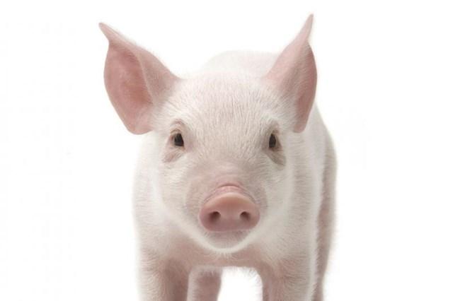Giá lợn hơi ngày 27/4/2019: Miền Bắc, Nam giảm, miền Trung tăng nhẹ