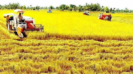 Nghị định về sửa đổi, bổ sung một số về quản lý, sử dụng đất trồng lúa
