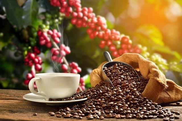 Xuất khẩu cà phê 6 tháng đầu năm 2019 giảm mạnh