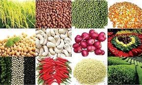 Hàng loạt nhóm hàng xuất khẩu nông sản bị giảm kim ngạch