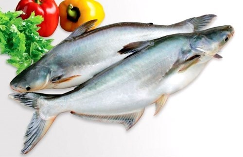 Diễn biến thị trường cá tra: Giá giảm, xuất khẩu giảm