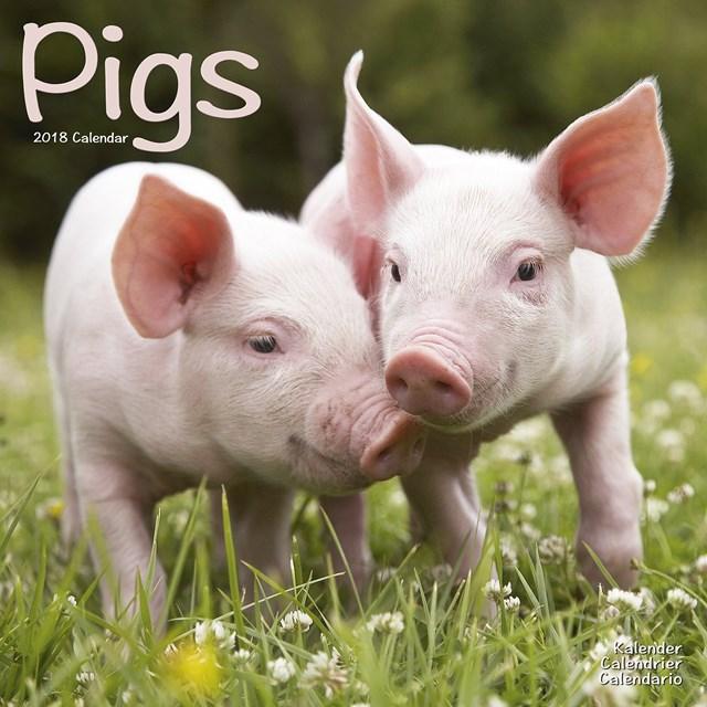 Giá lợn hơi tuần đến 29/12/2019 có xu hướng giảm