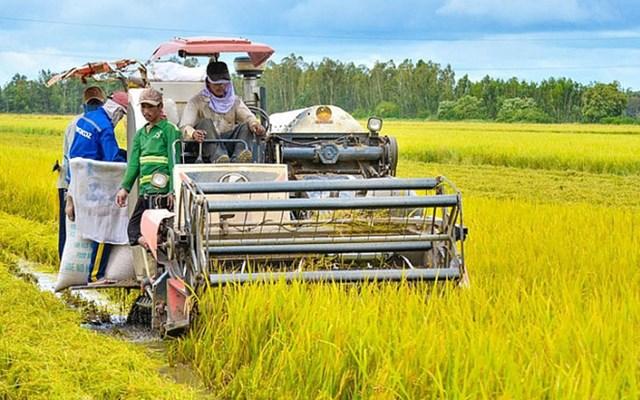 Thị trường là khâu quyết định tăng trưởng của ngành nông nghiệp năm 2020