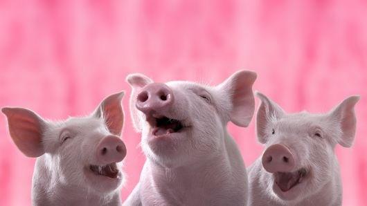 Giá lợn hơi ngày 16/4/2020 vẫn ở mức cao