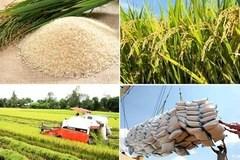 Xuất khẩu gạo nhưng phải đảm bảo an ninh lương thực quốc gia