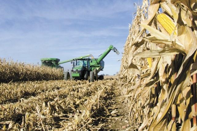 Giá nguyên liệu thức ăn chăn nuôi sẽ giảm mạnh