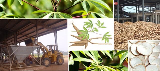 Xuất khẩu sắn lát 4 tháng đầu năm 2020 tăng 71,8% kim ngạch