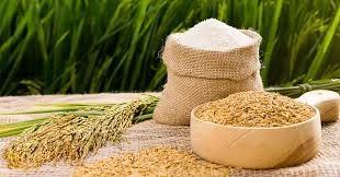 Diễn biến thị trường gạo tuần đến ngày 28/6/2020
