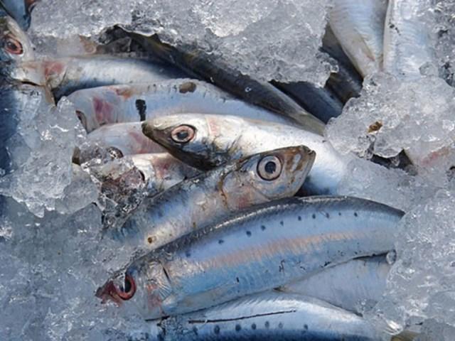 Kim ngạch nhập khẩu thủy sản 6 tháng đầu năm 2020 giảm 4,2%