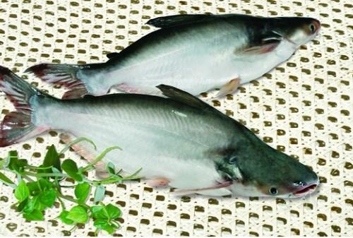 Giá cá tra trong tháng 8 tăng nhẹ