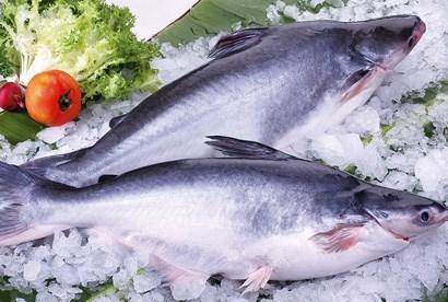 Xuất khẩu cá tra chịu tác động kép