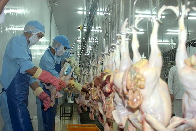 Soi 'điểm nghẽn' xuất khẩu của ngành chăn nuôi Việt Nam