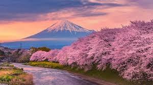 Xuất khẩu sang Nhật Bản 11 tháng đầu năm 2020 đạt trên 17,48 tỷ USD
