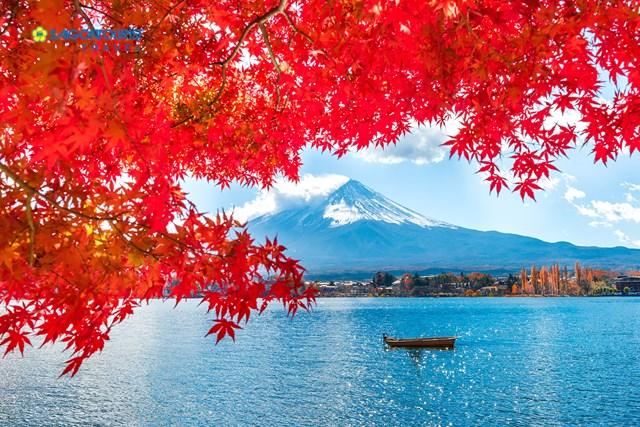 Nhập khẩu hàng hóa từ Nhật Bản 11 tháng đầu năm 2020 tăng 3,6%