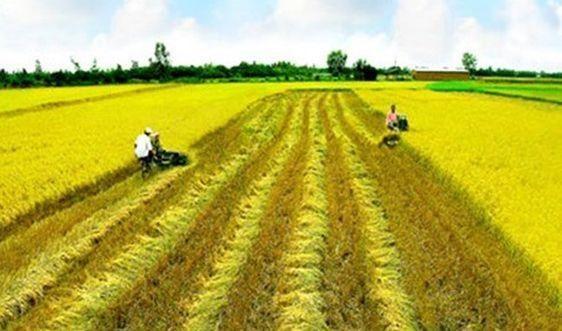 Nghị định 146/2020/NĐ-CP sửa đổi việc miễn, giảm thuế sử dụng đất nông nghiệp
