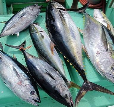 Cá ngừ xuất khẩu lấy đà cho năm nay