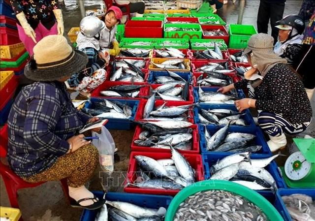 Nhiều mặt hàng thủy, hải sản tăng giá đến 15% nhưng vẫn hút hàng