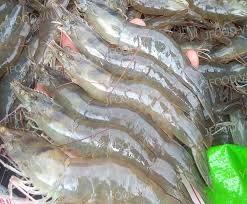 Cạnh tranh từ Ấn Độ có thể gây sức ép lên xuất khẩu tôm Việt Nam