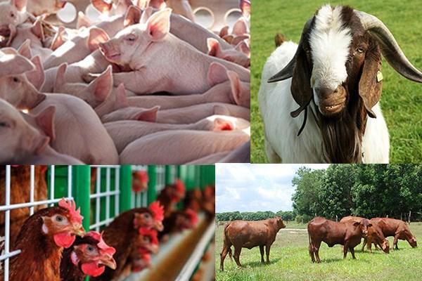 Nghị định 14/2021/NĐ-CP  quy định xử phạt hành chính về chăn nuôi