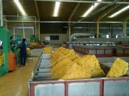 Xuất khẩu cao su quý 1/2021 tăng 103% kim  ngạch