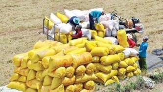 Dự báo Việt Nam tiếp tục giữ vị trí thứ 2 thế giới về xuất khẩu gạo