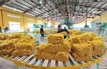 Xuất khẩu cao su 4 tháng đầu năm 2021 tăng trưởng tốt