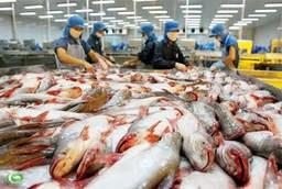 Sau nhiều năm sụt giảm, xuất khẩu cá tra sang Nga tăng mạnh