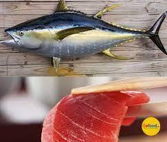 Nhu cầu cá ngừ đóng hộp Trung Đông sẽ tăng trong năm 2021