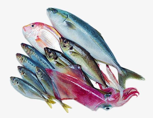 Việt Nam có nhiều lợi thế trong cuộc đua xuất khẩu thủy sản