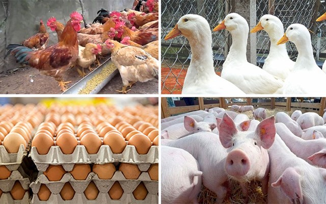 Xuất khẩu sản phẩm chăn nuôi tăng trưởng ấn tượng
